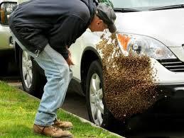 Bee Swarm on Car