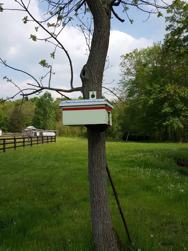 Swarm Capture Box 2
