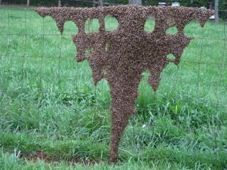 Swarm on Fence