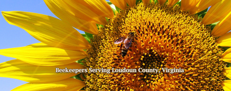 BeeSunflower_954x377.png