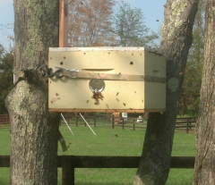 Swarm Capture Box