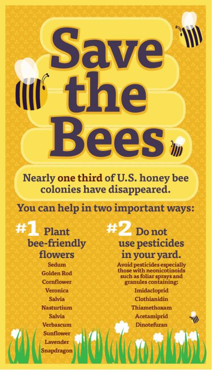 save-the-bees-poster.thumb.jpg.9587ce1a2