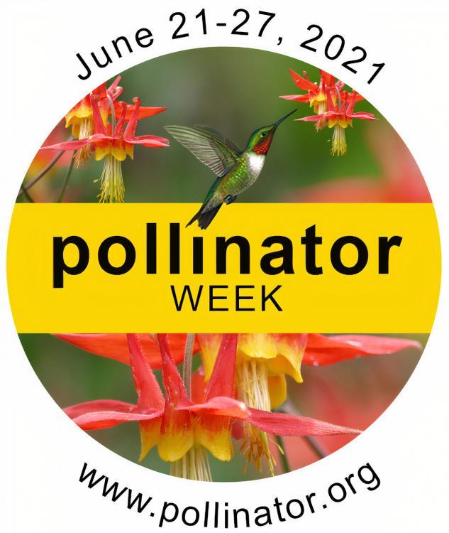 Pollinator-Week-Logo-2021.jpg.ff354b283b7b8961cc3b0c0570f7edac.jpg
